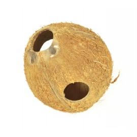 Kokos skorupa cała nieszczotkowana